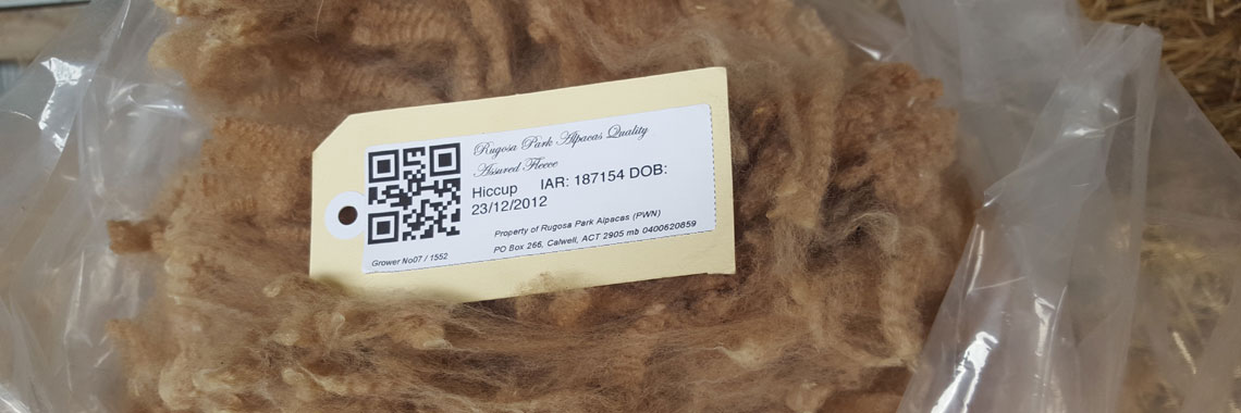 Rugosa Park quality raw alpaca fleeces