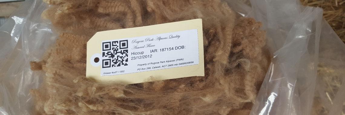 Rugosa Park quality raw alpaca fleeces